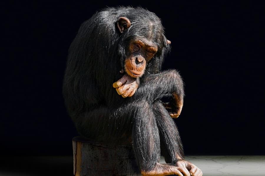 sitzender Primat als Symbol dafür, wie wichtig es ist in einer Gruppe gutes zu tun
